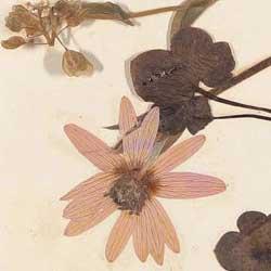 Bild von Seite mit Blumen aus Souvenir Album